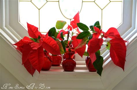 Decorations Poinsettia - decorating with poinsettias poinsettia home stories a to z
