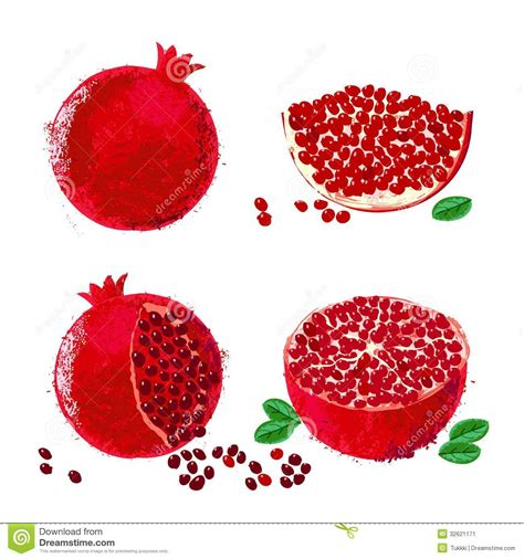 2 fruit by the foot in one package vector illustration of pomegranate fruits stock image