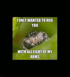 Misunderstood Spider Meme - misunderstood spider meme car www imgkid com the image