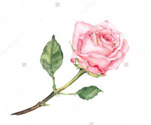 20 drawings of roses free psd ai eps format document