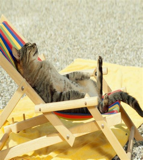 funny beach picture   funniest cat resting  beach funnyexpo
