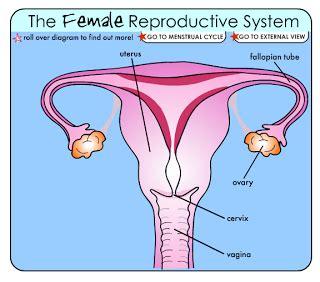 s reproductive system diagram flash interactive basics reproductive system
