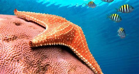 imagenes animales de mar estrella de mar animal related keywords estrella de mar