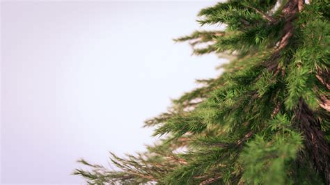 How To Make A Pine Tree Out Of Paper - creating photorealistic pine trees in blender