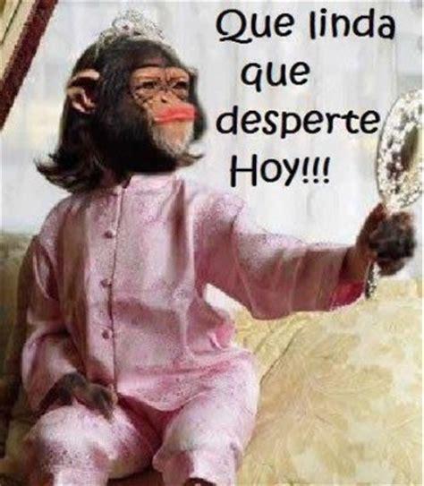 im 193 genes de monos chistosos con frases nuevas imagenes de monos con frases chistosas para