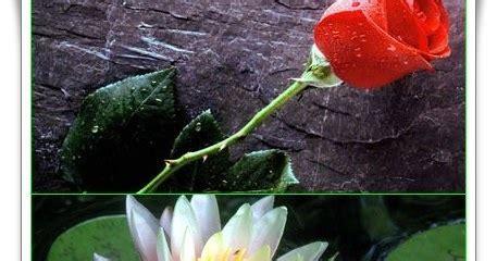 kata mutiara mawar  teratai