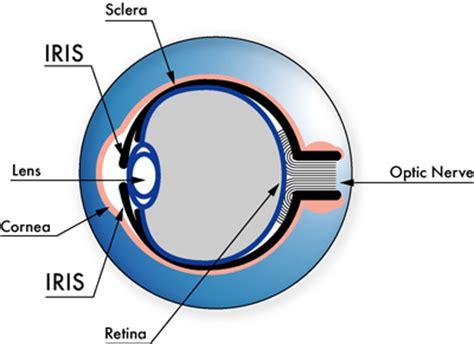 iris scanning | howstuffworks