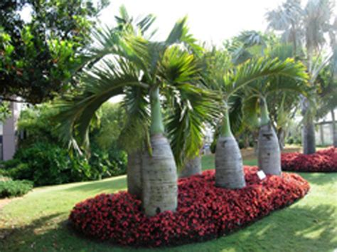landscape broward palms landscape