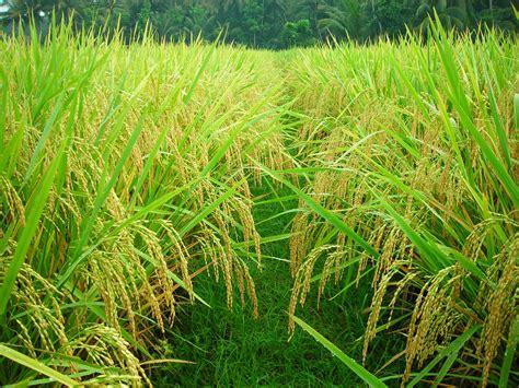 Pupuk Organik Bioboost teknologi untuk pertanian organik bioboost