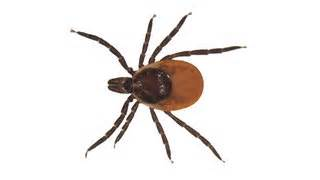 how do you get a tick a how to get ticks your clothes lyme disease health