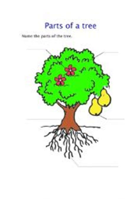english teaching worksheets parts of a tree
