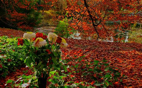 autumn flowers fall flowers wallpapers wallpaper cave