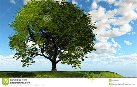 design elements lone tree lone tree royalty free stock photography image 13343967