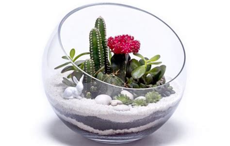 9 steps to make a terrarium using succulents amp cacti