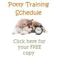 how to get a copy of your house plans 1000 ideas about puppy schedule on pinterest new puppy