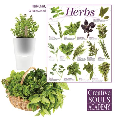 herbal academy using flavorful culinary herbs herbal learn to cook with herbs for our late spring project