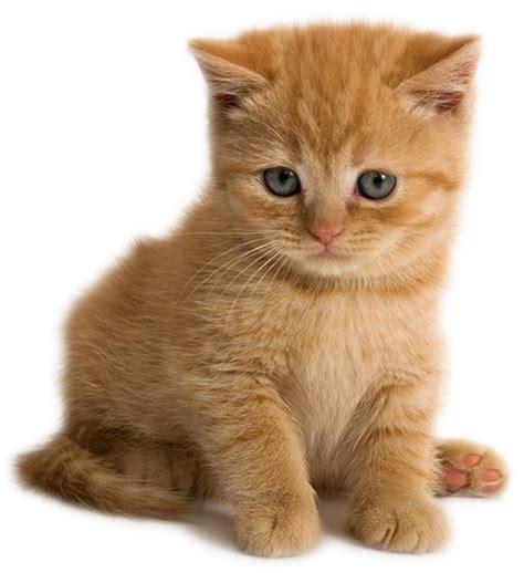 capricci animati: raccolta di bellissime immagini gatti e
