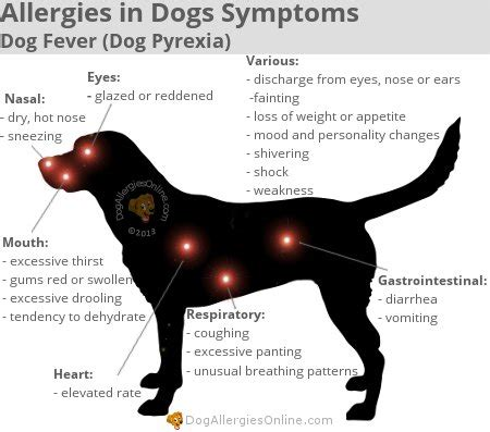 fever in puppies allergies in dogs symptoms fever pyrexia