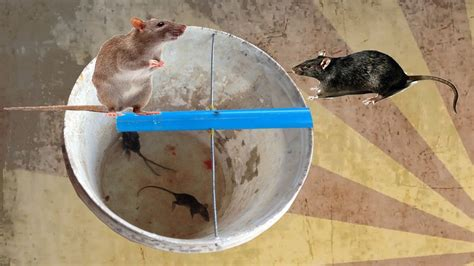 rat trap homemade  cambodia youtube