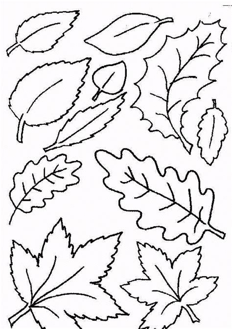 coloring pages for leaves leaf coloring pages coloringpages1001