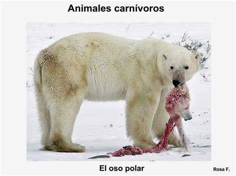 imagenes animales sin copyright imagenes animales carnivoros car interior design