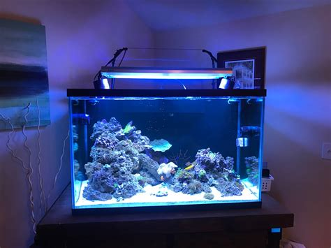 t5 supplement t5 supplement lighting reef central community