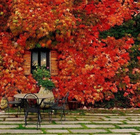Fall Leaves Decorating Gardens And Backyards For Outdoor Fall Backyard Ideas