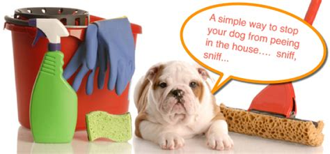 how do i stop dog peeing in house a simple way to stop your dog from peeing in the house that works maui dog remedies