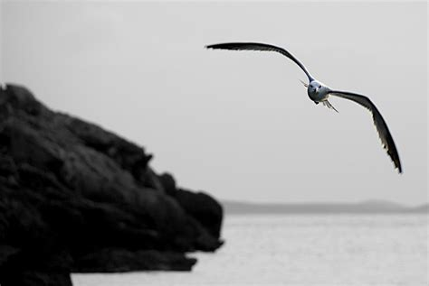 imagenes a blanco y negro hermosas paisajes en blanco y negro off topic y humor 3djuegos