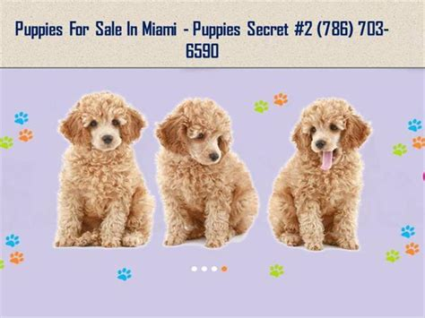 puppy stores in florida puppy stores in miami fl authorstream