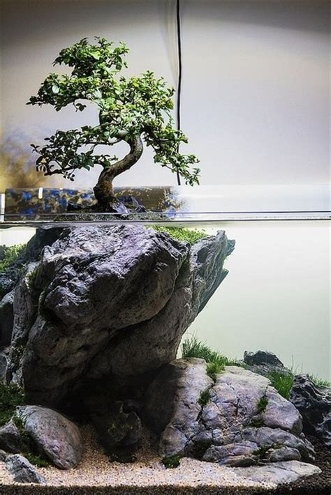 aquascape tree have experiments been done combining bonsai trees and