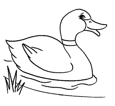 ping duck coloring page duck coloring page animals town animals color sheet