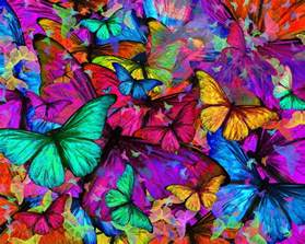 Butterfly Duvet Covers Rainbow Butterfly Explosion Photograph By Alixandra Mullins