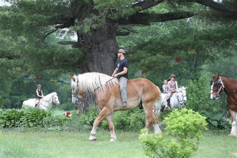 farewell to the horses saying goodbye the horses at the tree bedlam farm journal bedlam farm journal