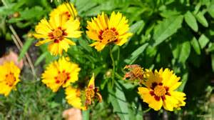 yellow summer flowers barbaras hd wallpapers