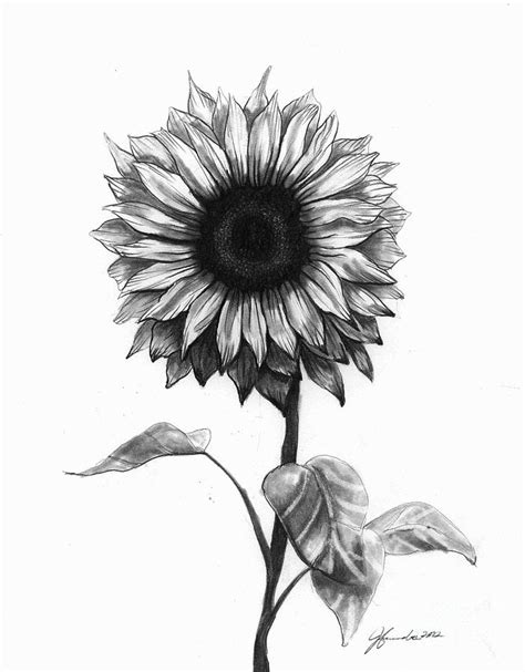How To Draw Sunflowers In A Vase by Drawing By J Ferwerda