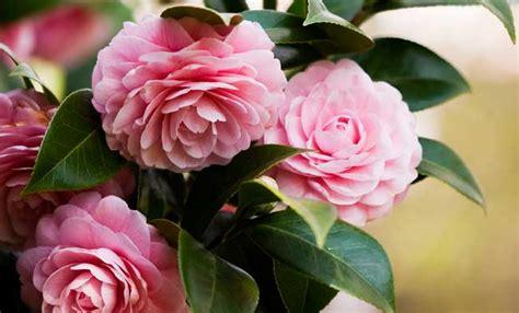 fiori primaverili fiori primaverili tutte le variet 224 da avere in giardino