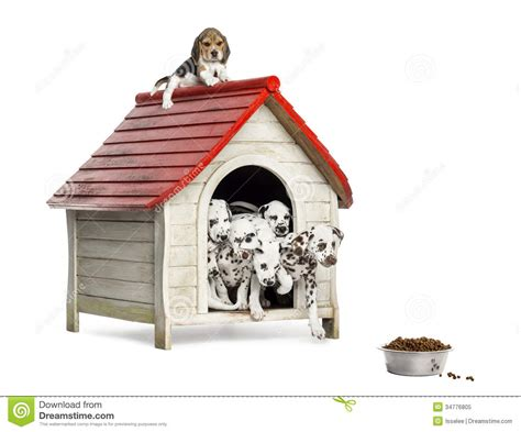 Group of dog puppies playing with a dog kennel isolated stock image image 34776805