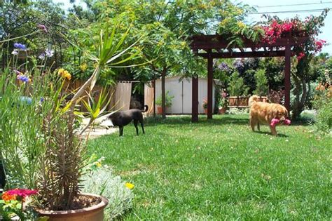 backyard ideas for dogs landscaping ideas for small backyards with pergola and