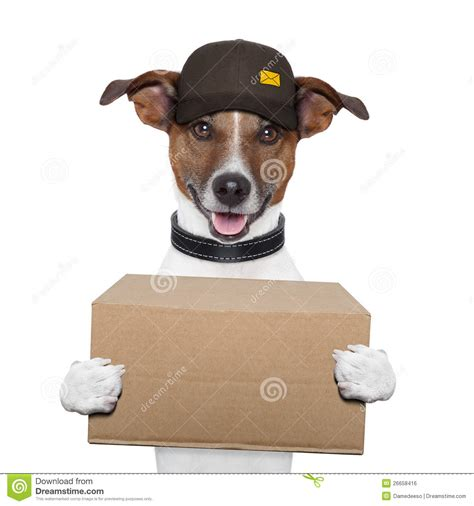 puppy delivery delivery post royalty free stock image image 26658416