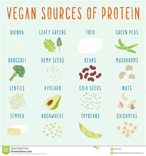 protein z schwangerschaft vegan sources of protein stock vector illustration of