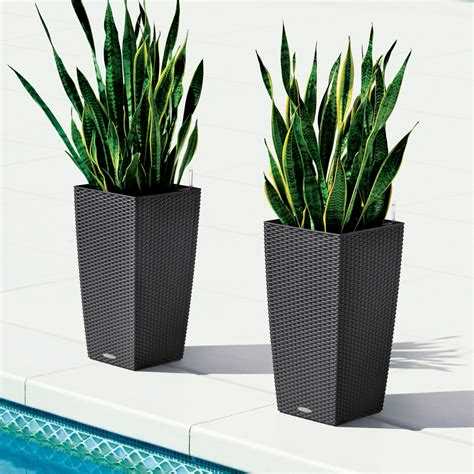 Lechuza Planters Canada by Lechuza Granite All In One Cube Cottage Self Watering Planter