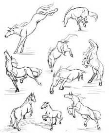 horse studies rasnovstables deviantart