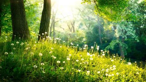 green wallpaper for eye relaxation positive thinking meditation music calm and peaceful