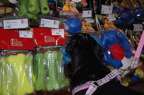 pug shopping just a sunday shopping about pug