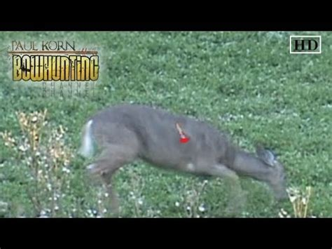 perfect arrow placement on deer double lung shot despite