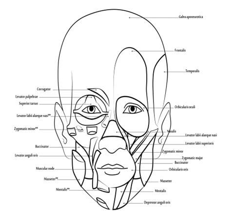 human anatomy coloring book by margaret matt anatomy coloring book 109 best biology images on