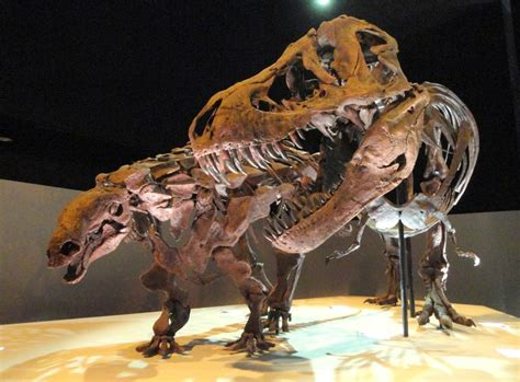 Awesome Houston Museum Of Natural Science Tour Planning