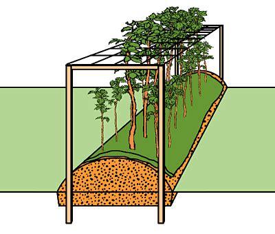 Viereckigen Garten Gestalten by Www Pflanzanleitung Ch Himbeeren Backen