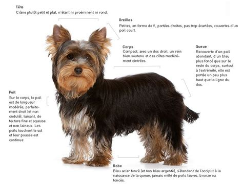 scottish yorkie 299 best images about animals dogs on sheepdog poodles and